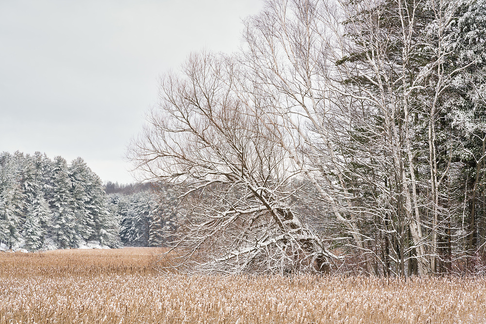 https://Duncan.co/snow-covered-trees-at-the-edge-of-the-forest