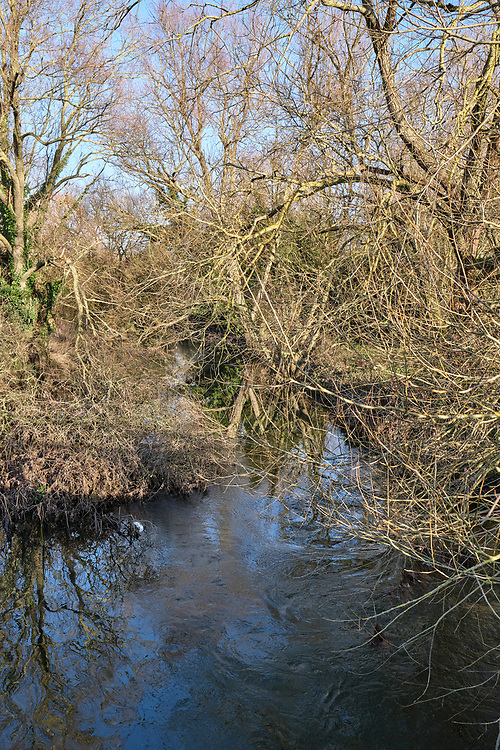 Looking upstream on the road bridge which cross over the River Gipping. Pars of the river are very overgrown by trees & plants from the rivers edge.<br /> Photo by Jonathan J Fussell, COPYRIGHT 2020