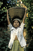 A balinese girl near Ubud carries her harvest of rice in a basket on her head.