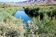 Oasis with Jebel Kissane mountains at the Draa river in the Draa valley, Morocco.
