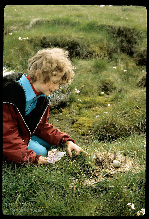 Little girl w/ bouquet of flowers & feathers finds newly-hatched arctic tern chick in its nest. Iceland