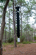 Insect trap in a pine tree forest Near Nazare, Portugal