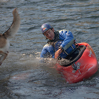 Kayaker David Manning 's dog jumps ship into   the Kananaskis River near Calgary, Alberta, Canada.