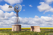 windmill and water tank in field of canola with cumulus cloud in sky near Urana, New South Wales, Australia <br /> <br /> Editions:- Open Edition Print / Stock Image