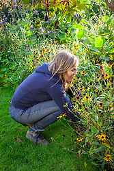 Cutting back rudbeckias after they have finished flowering
