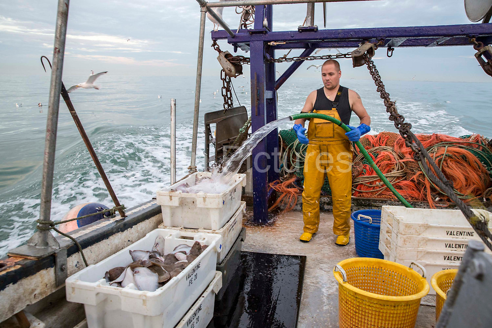 Luke guts and washes the fish of the last catch of the night and boxes them up with ice to keep fresh and ready for market.  Luke is a Folkestone based fisherman out trawling for a 12 hour night solo shift on a fishing trip in his boat Valentine FE20, Hythe Bay, the English Channel, United Kingdom.