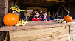 Kilduff Farm, East Lothian, Scotland, United Kingdom, 17 October 2019. Pumpkin Patch: The pick your own pumpkin patch gears up for its opening tomorrow. In its second year, Lucy and Russell Calder and their children make final preparations for visitors. The patch is open this weekend and next, selling a variety of Halloween carving pumpkins and culinary pumpkins. Pictured: Maisie (10 years) and Louisa (8 years) await customers<br /> Sally Anderson | EdinburghElitemedia.co.uk