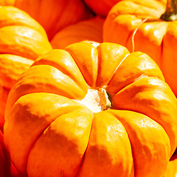 maller, Miniature Orange Pumpkins on display and ready for sale.