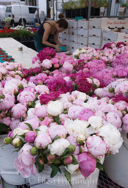 Peonies for Sale at Union Square Market in Manhattan
