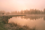 Misty Sunrise on the Millpond, Sierra Mist, Tall Grass, Graeagle California; Sierra Nevada Mountains, copyright 2014 David Leland Hyde.
