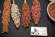 SORGHUM, Sorghum bicolor Showcase: 'Coral' from Malakal, South Sudan Breeders: Experimental Farm Network<br />Chef: Ben Meyer, Old Salt Marketplace<br />Dish: Sorghum - cooked, popped & sweet butter