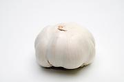 Allium sativum Garlic bulb white background
