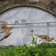 London,England,UK : 11th April 2016 : 'Endangered 13' Project, Amstreetart street artists painting  'Curlew' raising awareness Endangered animal at Ackroyd Drive, Sponsor by Tower Hamlets council in London. Photo by See Li