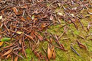 Autumn leaves on moss