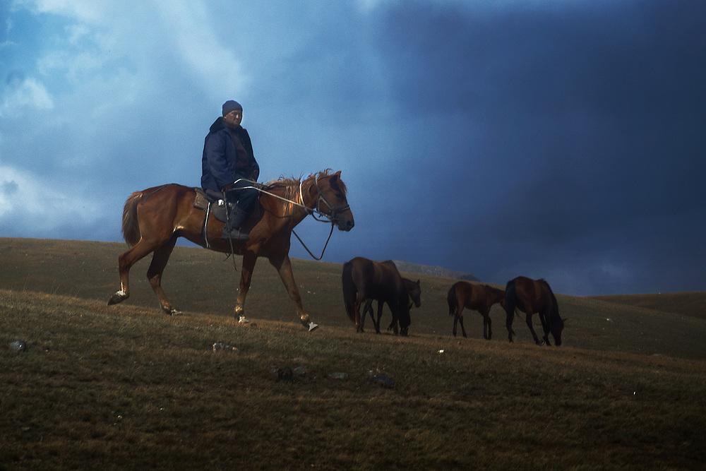 A family of nomads can have a herd of several hundred hoses. During summer horses roam free and mix with other herds. When it gets colder in Autumn men (or sometimes young boys) ride around the valleys and gather the horses to move them to villages.
