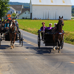 Strasburg, PA - June 19, 2016: Multiple Amish buggies and wagons in summer on a county road in Lancaster County, PA.