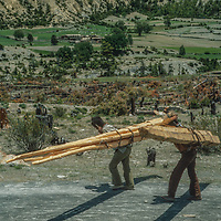 Villagers haul recently harvested trees to build houses in the remote Manang Valley, north of Annapurna in Nepal.