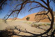 Zwischen den berühmten roten Sanddünen des Sossusvlei liegen flache, zeitweise von Wasser bedeckte Flächen. Von den seltenen Regenfällen gespeiste Wasseradern ermöglichen einigen größeren Bäumen das Überleben. | Sesriem Sossusvlei sand dune;