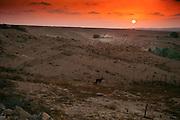 Israel, Negev Desert landscape at sunset