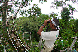 View Of Meyer & Ladder Above Treetop Canopy, Tiputini