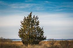 Northwest Harbor landscape in East Hampton, NY in Autumn
