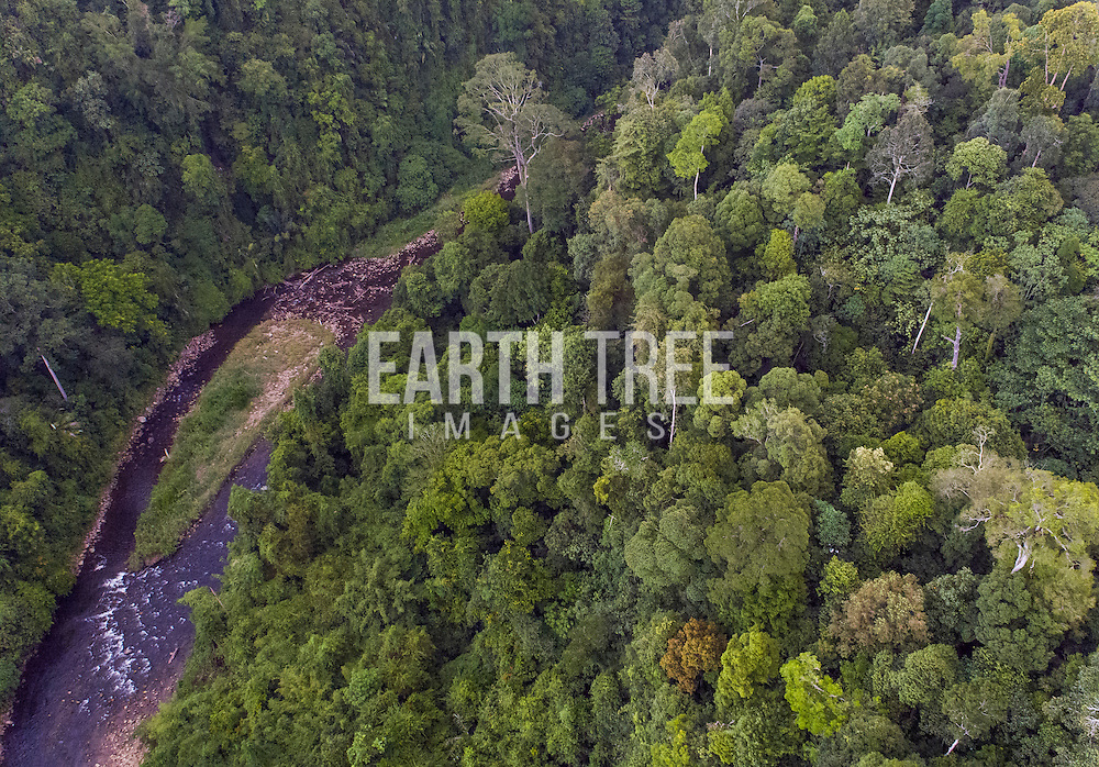 Pristine rainforest in the Leuser ecosystem and the Gunung Leuser National Park, Aceh Province, Forest cover, Leuser Ecosystem, Sumatra, Indonesia. The Leuser Ecosystem is home to the largest extent of intact forest landscapes remaining in Sumatra and it is among the most biologically abundant landscapes ever described. Photo: Paul Hilton for Earth Tree Images