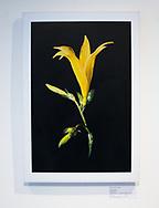 Herbarium  Serie 2015. C-Print auf eine MDF-Platte mit einer Stärke von 0,8 mm gebracht und mit einer besonderen Schicht aus Bienenwachs versiegelt.<br /> Format:  30 cm x 30 cm. 60 cm x 60 cm.<br /> Limitierte Edition von 15 ist vom Künstler handsigniert und nummeriert. ©Mauricio Bustamante