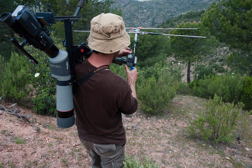 Life Lince (lynx) field technician, Pepe radio tracking a collared Iberian Lynx (Lynx pardinus)<br /> Sierra de Andújar Natural Park, Mediterranean woodland of Sierra Morena, north east Jaén Province, Andalusia. SPAIN<br /> <br /> Mission: Iberian Lynx, May 2009<br /> © Pete Oxford / Wild Wonders of Europe<br /> Zaldumbide #506 y Toledo<br /> La Floresta, Quito. ECUADOR<br /> South America<br /> Tel: 593-2-2226958<br /> e-mail: pete@peteoxford.com<br /> www.peteoxford.com