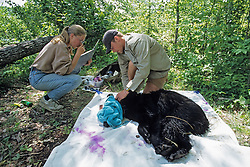 Jodi & Shay Working Up Black Bear