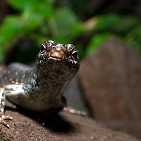 Reptiles - Mauritius
