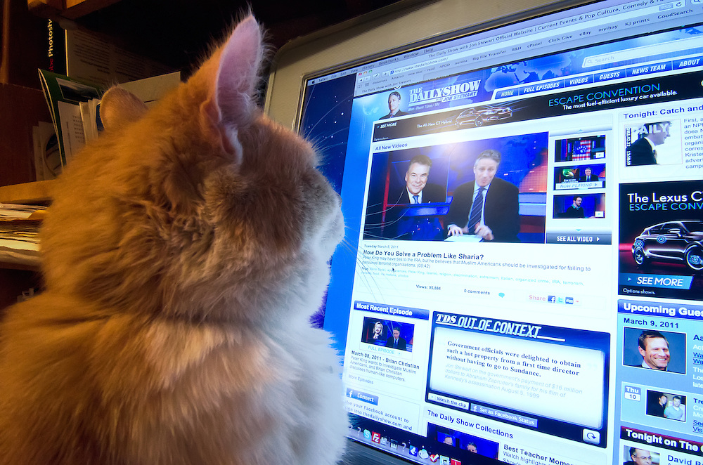 Cat watching The Daily Show show on a computer.