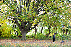©Licensed to London News Pictures 19/10/2020  <br /> Chelsfield, UK. A dog walker enjoying a morning walk. Bright autumnal weather today in Chelsfield, South East London. This week is expected to be a mild week with temperatures up to 18C. Photo credit:Grant Falvey/LNP