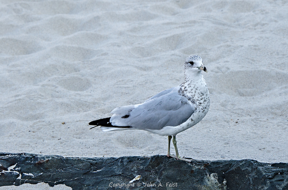 On a wonderful sumer day at the shore, I happened upon these gulls who put on a wonderful show for me to share