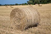Round straw bales in field, Shottisham, Suffolk, England