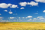 Wheat field<br /> Rosenhof_<br /> Saskatchewan<br /> Canada