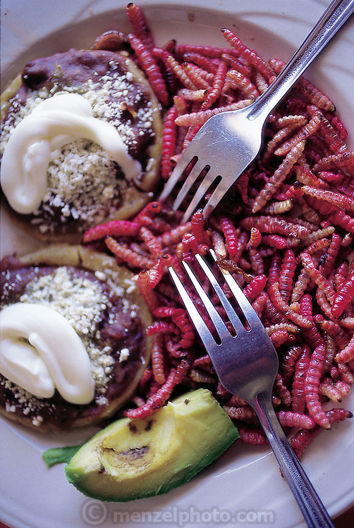 A dish of pan-fried red agave worms as prepared by owner and chef María Luisa Aguirre del Gadillo at Restaurante Zempoala. She wants to expand her culinary market into the United States. Teotihuacan, Mexico. (Man Eating Bugs page 117 Bottom)