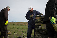 Dr David Binnie (centre) and crofter Dougie Reid working on a dry stone wall on the the Inner Hebridean island of Colonsay on Scotland's west coast.  The island is in the council area of Argyll and Bute and has an area of 4,074 hectares (15.7 sq mi). Aligned on a south-west to north-east axis, it measures 8 miles (13 km) in length and reaches 3 miles (4.8 km) at its widest point, in 2019 it had a permanent population of 136 adults and children.