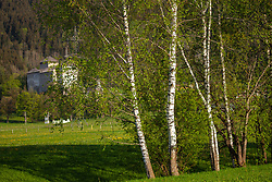 THEMENBILD - Birkenbäume im Kapruner Moos, dahinter die Burg Kaprun, aufgenommen am 28. April 2018, Kaprun, Österreich // Birch trees in the Kapruner Moos, behind the castle Kaprun on 2018/04/28, Kaprun, Austria. EXPA Pictures © 2018, PhotoCredit: EXPA/ Stefanie Oberhauser