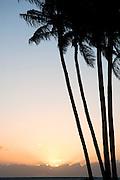 Palm trees line the sunset on Molokai, Hawaii.