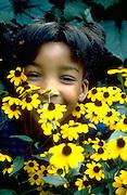 Happy 9 year old girl peeking through yellow daisies.  St Paul  Minnesota USA