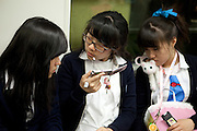 Koreanische Schuelerinnen vorfolgen ein Fernsehprogramm auf dem Mobil Telefon in der Metro von Seoul.<br /> <br /> Korean school girls are following a television broadcast in the Seoul Metro (subway).