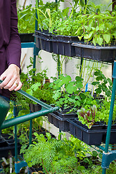Watering racks of plants in a greenhouse