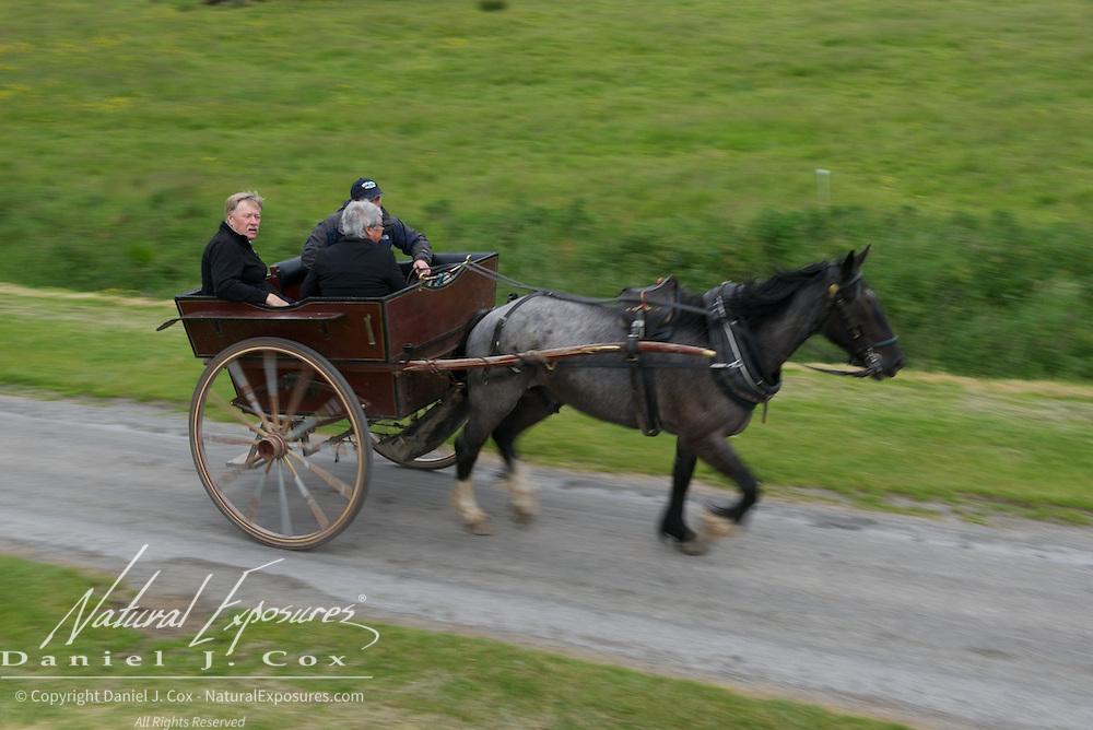 Horse pulling a carriage at Killarney National Park, Ireland.