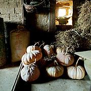Pumpkins stored in the loft of a Hani ethnic minority farmer's house, Shang Lao Zhai village, Yunnan Province, China.