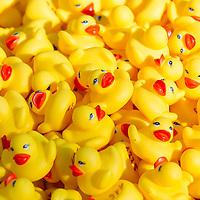 Rubber Duck Race 2013