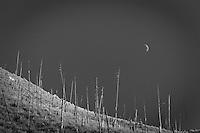 Scenic image of burnt trees on mountainside. Salmon River, Idaho.