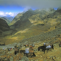 PERU, Cordillera Vilcabamba. Pack train for a National Geographic archaeology expedition crosses Choquetecarpo Pass (5100+ meters) en route to Cerro Victoria, at end of canyon below (Quebrada Moyoc).  NGM #MM7047_0001