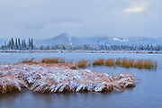 Early snowfall covering autumn colored foliage at edge of Vermillion Lakes<br />Banff National Park<br />Alberta<br />Canada