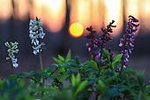 Small World + Flowers