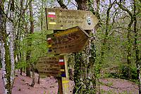 France, Morbihan (56), forêt de Brocéliande, Tréhorenteuc, le Val sans Retour // France, Morbihan (56), Forest of Brocéliande, Tréhoreneuc, le Val Sans Retour (the Val without return)